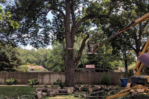 Five Tree Diseases That are Common in Michigan