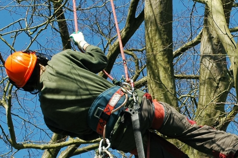 Signs You Should Call Seaben Tree Service in Kalamazoo This Spring