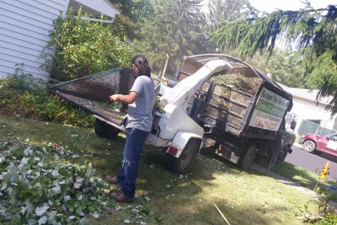 Services Available from Seaben Tree Service in Kalamazoo