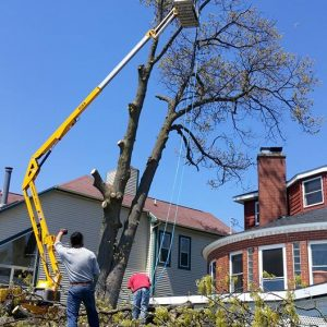 seaben-tree-service