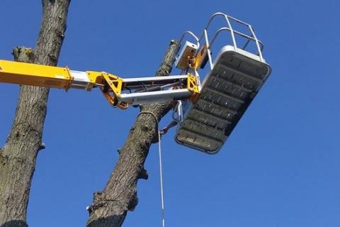 Three Winter Tree Care Tips from Seaben Tree Service, Your Kalamazoo Tree Service Company