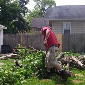 seaben tree service