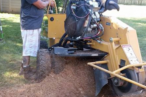 Three Reasons You Should Call Seaben for Stump Grinding in Kalamazoo
