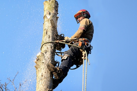 Three Tree Care Problems Commonly Found on Commercial Properties in Kalamazoo