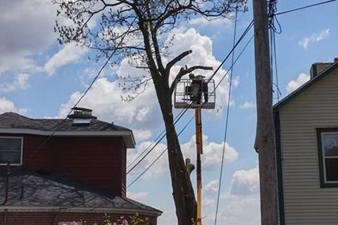 Spring Tree Care Checklist from a Kalamazoo Tree Service Company